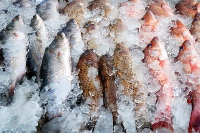 Как правильно выбрать замороженную рыбу