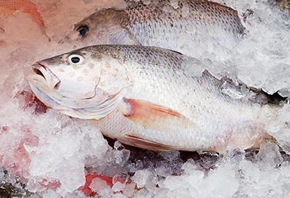 Сколько хранится охлажденная рыба
