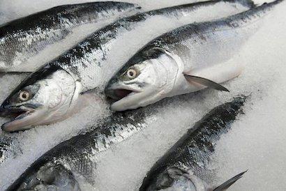 Длительное хранение рыбы способом заморозки
